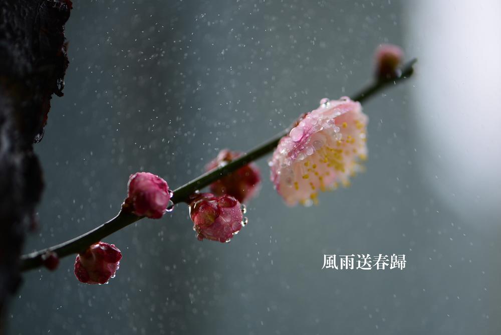 风雨送春归