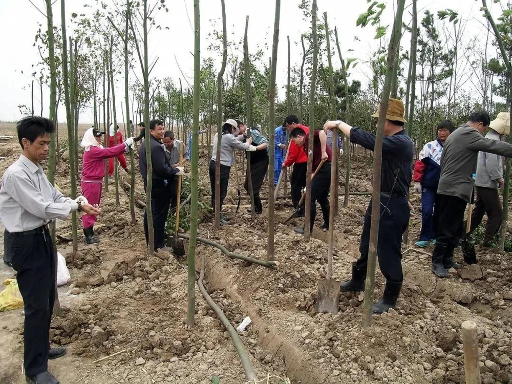 2005年海大人种下了新校第一批苗木